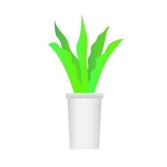 관엽 식물 - 산세베리아