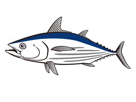 Skipjack illustration _ 002