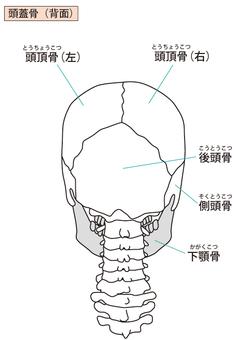 Skull (back)