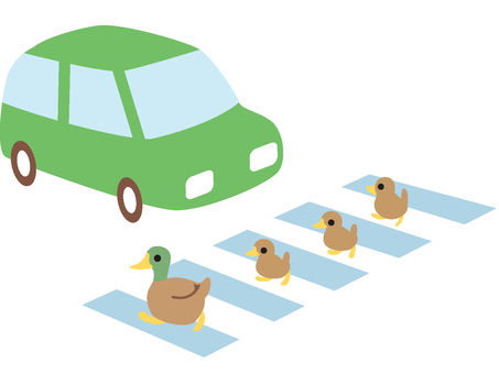 Ducks across the crosswalk