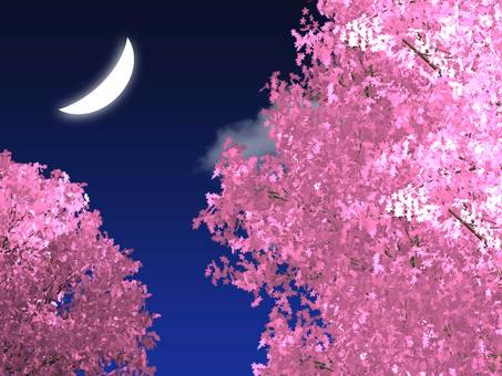 A crescent moon and a beautiful night cherry blossom