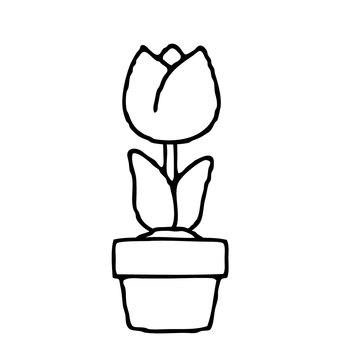 【Main Line Spring】 Tulip Material 0004