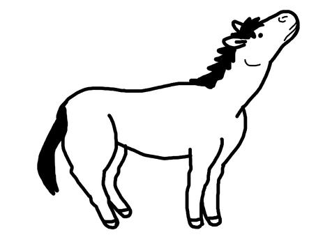 Horse animal creature