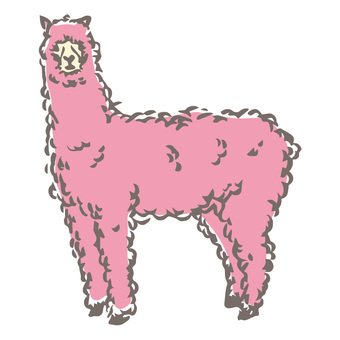 핑크 알파카