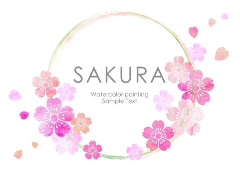 Sakura 428