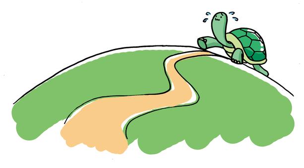 Walking turtle