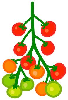주렁주렁 토마토 3