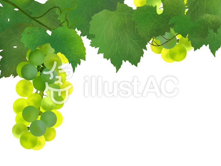 葡萄(緑)フレーム