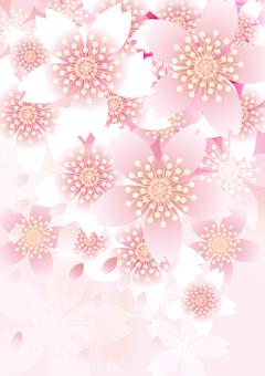 벚꽃의 꽃 91