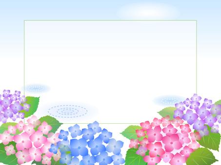 79.繡球花風景