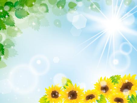 Summer image 012
