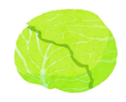 Watercolor ingredients series cabbage