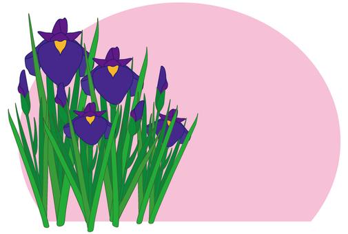 Flower - iris (shoumu) -17