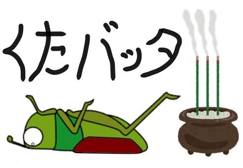 Kuta grasshopper