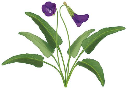 Violets / weeds