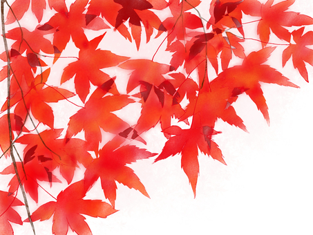 Red leaves red