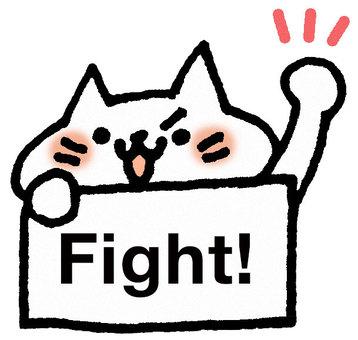 Fight! Cat