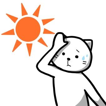 Hot cat
