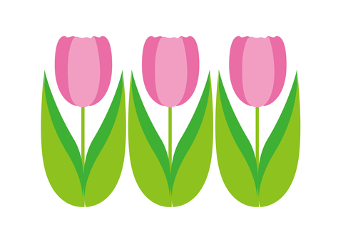 Three tulips - pink