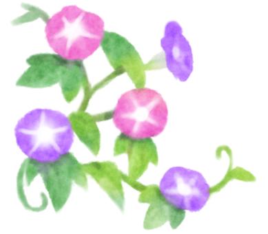 나팔꽃 1