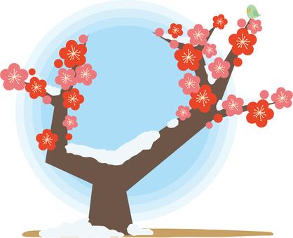 Plum tree, plum blossom
