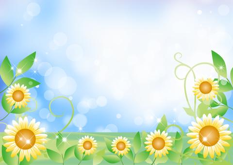 Sunflower _ sky _ Landscape