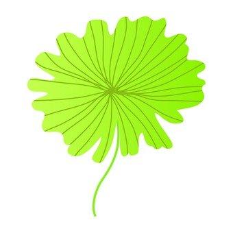 2 개의 대형 잎