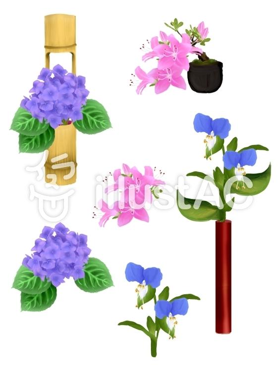 6月の花イラスト No 798710無料イラストならイラストac