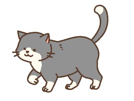 하찌와레 고양이