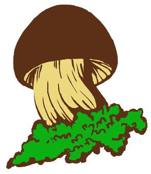 버섯 07 잔디있는 작은
