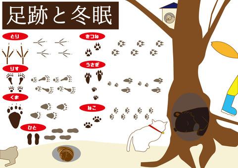 Animal footprints, hibernation