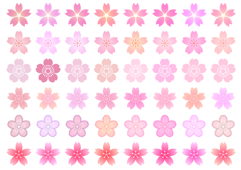 Cherry blossoms 07
