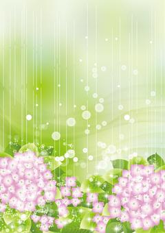 Hydrangea in the rain 41