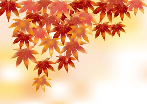 Autumn leaves 44