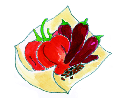 Spice illustration