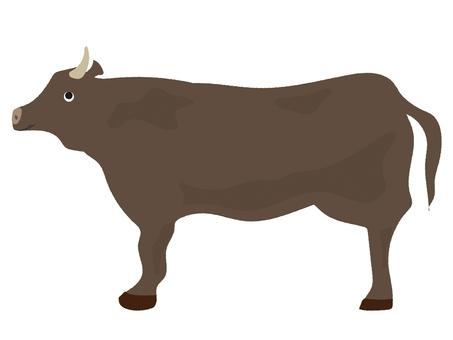 Bovine black wagyu beef 1