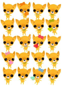 Chihuahuas pattern