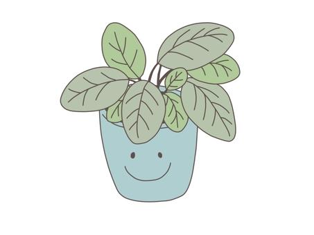 Houseplant (Smile)