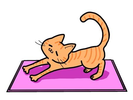 瑜伽貓(茶虎)