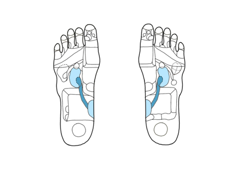 Reflective area of foot Figure - excretion zone (without bone)