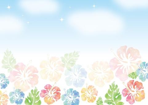 Hibiscus 8