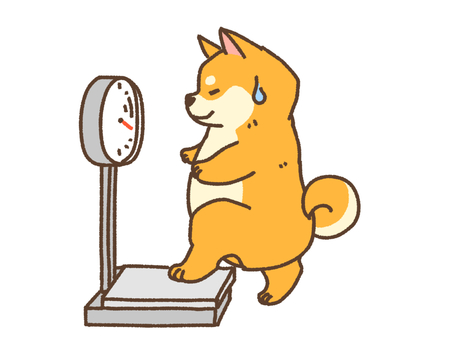 体重測定柴