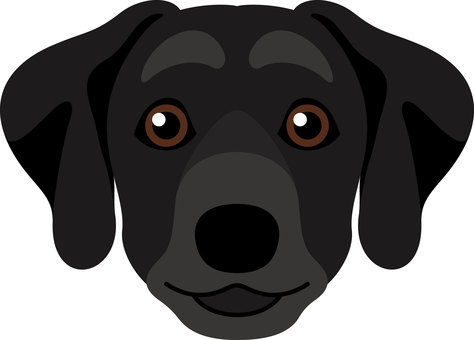 Dog breeds Labrador Retriever