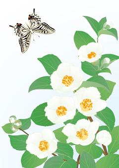 Lumbar butterfly in summer camellia _ Details