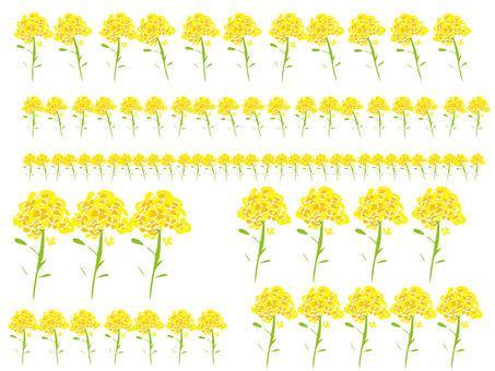 Nanohana flower line
