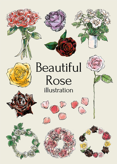 Beautiful rose illustration