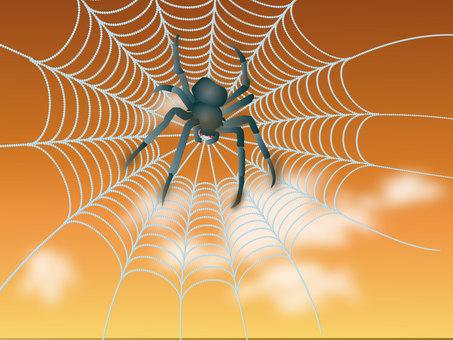Spider webs 01