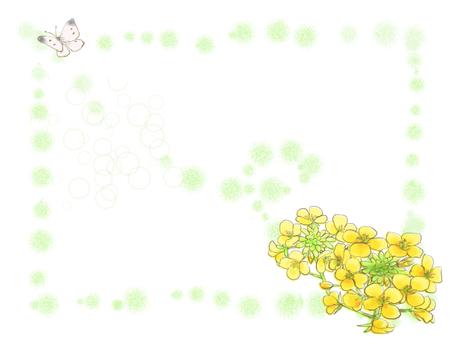 Rape flower 6