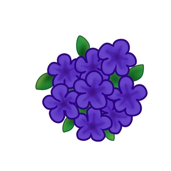 Petunia purple