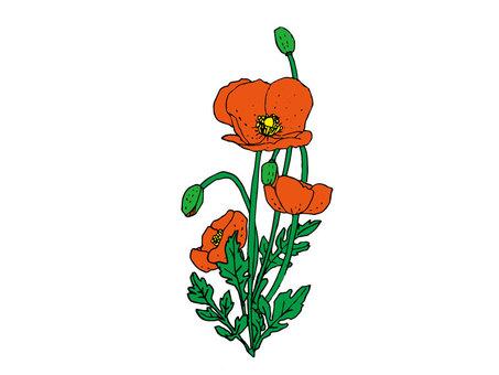 양귀비 꽃